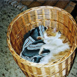 Filou (washing basket)