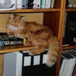 Moritz (bookshelf)
