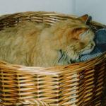 Moritz (washing basket)