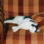 Mr Magoo (bigger, sleeping)