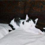 Mr Magoo (little, sleeping)
