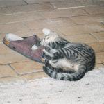 Speedy (slipper)